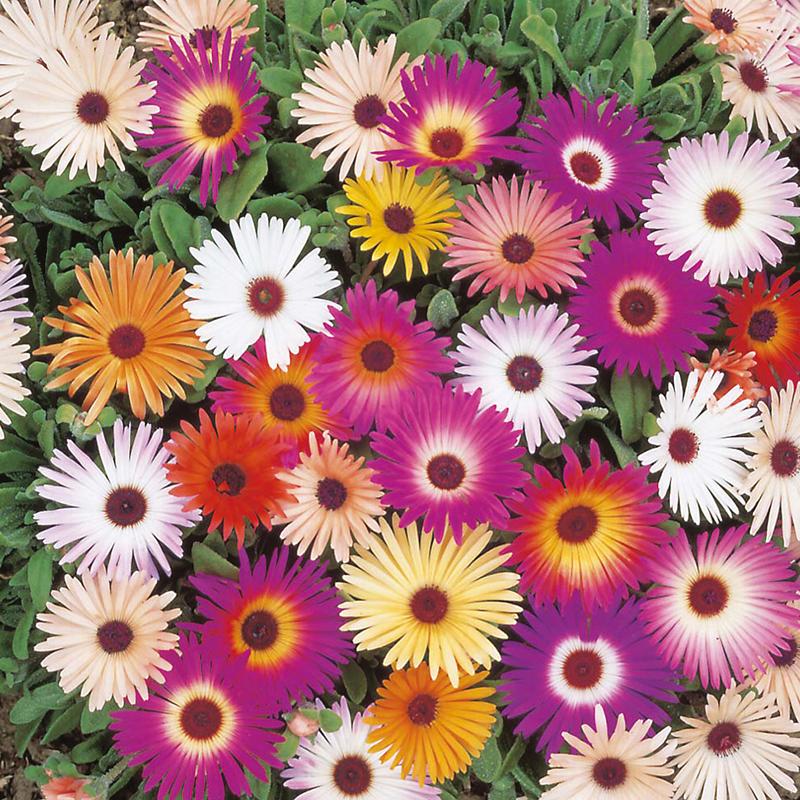 Микс цветок