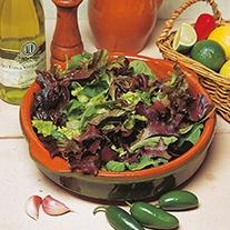 Lettuce D.T.Brown's Salad Mix Seeds