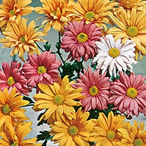 Chrysanthemum Indicum Korean Hybrids Flower Seeds