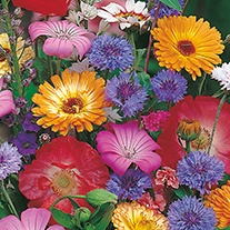 Scatter & Grow Annuals Mixed Flower Seeds