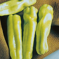 Pepper (Sweet) Biscayne F1 Seeds