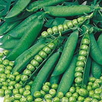 Pea (Maincrop) Onward AGM Seeds