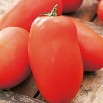 Tomato Roma VF Seeds