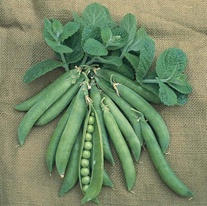 Pea (Second Early) Hurst Greenshaft AGM Seeds