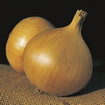 Onion (Globe) Bristol F1 Seeds