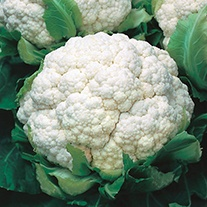 Cauliflower Walcheren Winter 3 (Armado April) AGM Seeds