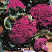 Cauliflower Graffiti F1 AGM Seeds