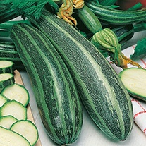 Marrow Long Green Bush 4 Seeds