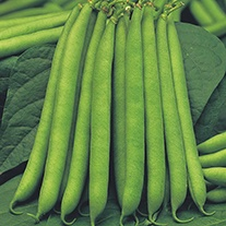 French Bean (Dwarf) Montano Seeds