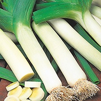 Leek Autumn Mammoth 2 (Tornado) Seeds