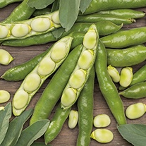 Broad Bean The Sutton AGM Seeds