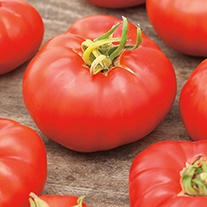 Tomato Marmande AGM Seeds