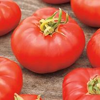 Tomato Marmande AGM (Beefsteak) Veg Plants