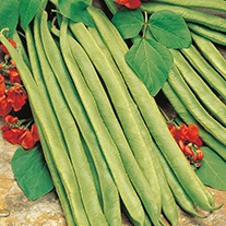 Runner Bean (Red Flowered) Lady Di AGM Seeds