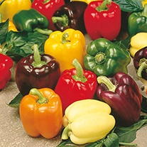 Pepper (Sweet) D.T. Brown's Sweet Pepper Mixture Seeds