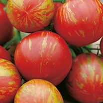 Tomato Tigerella AGM (Medium) Seeds