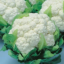 Cauliflower Snow Crown F1 Seeds
