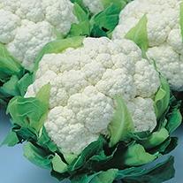 Cauliflower Snow Crown F1 Seeds