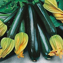 Courgette (Climbing) Black Forest F1 Seeds