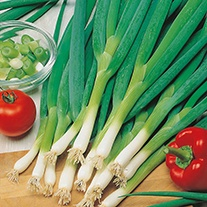 Onion (Spring) Spring Slim Seeds