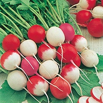 Radish D.T. Brown's Summer Blend Seeds