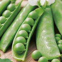 Pea (Snap type) Sugar Snap Seeds