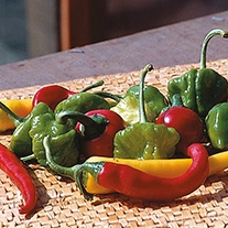 Pepper (Hot) D.T. Brown's Hot Pepper Mixture Seeds