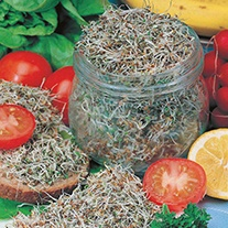 Salad Sprouts Alfalfa Seeds