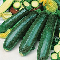 Courgette Zucchini Seeds
