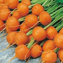 Carrot Paris Market 5 (Atlas) Seeds