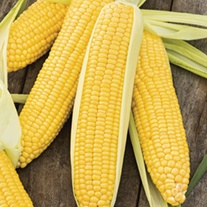 Sweetcorn Incredible F1 Seeds
