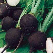 Radish (Winter) Black Spanish Round Seeds