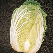 Oriental Greens Chinese Cabbage Kasumi F1 AGM Seeds