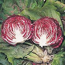 Radicchio Cesare Seeds