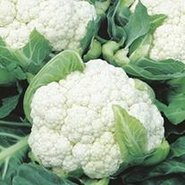 Cauliflower Clapton