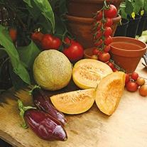 Melon Emir F1 AGM Seeds