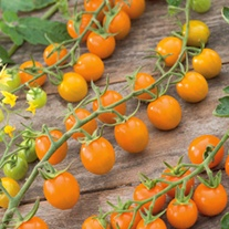 Tomato Sungold F1 AGM Seeds