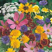 Wildlife Friendly Mix Flower Seeds
