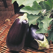 Aubergine Money maker No 2 F1 Seeds