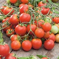 Tomato Tumbler F1 Seeds