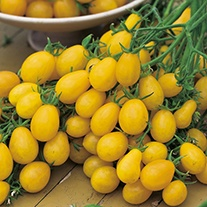 Tomato Ildi AGM Seeds