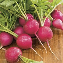 Radish Pink Beauty AGM Seeds