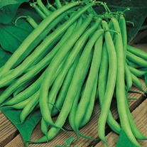 Climbing French Bean Blue Lake Veg Seeds