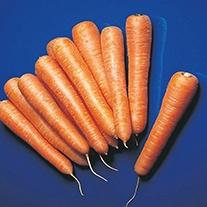 Carrot Senior F1 Seeds