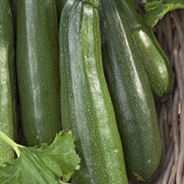 Courgette Alexander F1 Vegetable Seeds