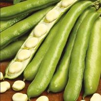 Broad Bean De Monica Seeds