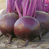 Beetroot Bettollo F1 Seeds