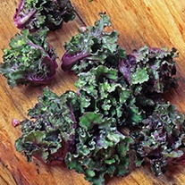 Kalettes Mixed F1 Seeds
