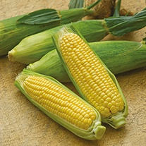 Sweetcorn Mirai Picnic F1 AGM Seeds