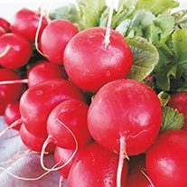 Radish Escala F1 AGM Seeds